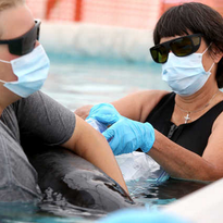 Veterinarian Connie Chevis, right, treats the injuries of a melon-headed whale in the quarintine are of the Institute for Marine Mammal Studies on Wednesday, September 2, 2015. Two melon-headed whales were found stranded in Waveland on Tuesday. The whales are in critical condition and IMMS staff is working around the clock to stabilize them.