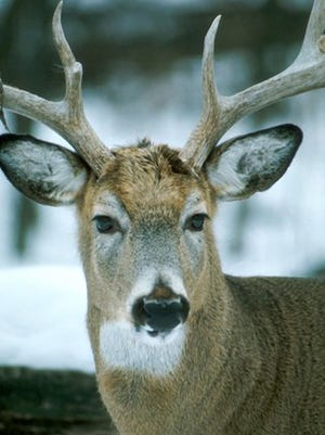 The 2015 deer hunting season has had two fatalities so far, more than the last five years combined.