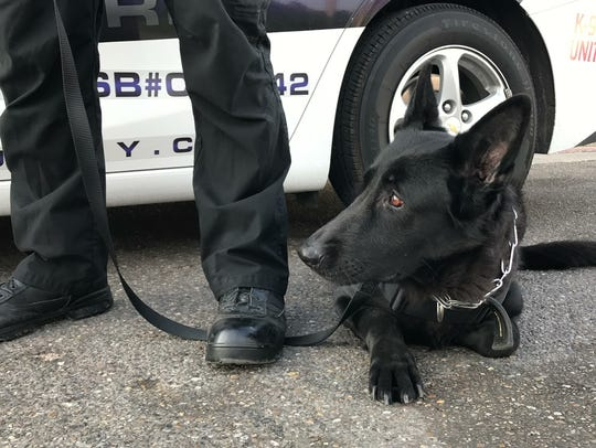 A S.E.A.L. Security Services K-9 lies on the ground