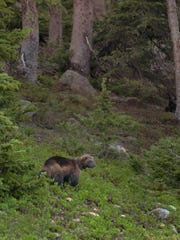 Fort Collins wildlife photographer Ray Rafiti captured