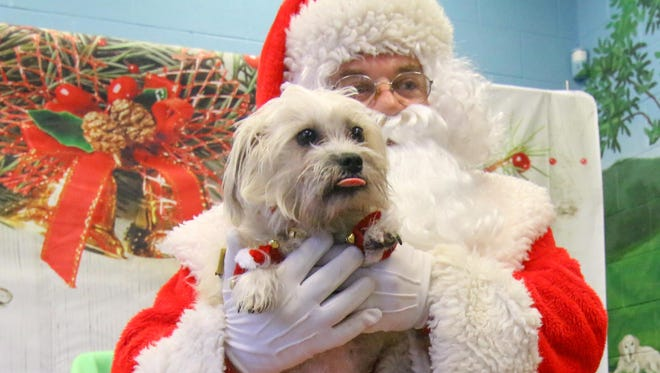 Mandi a Fox terrier mix takes a photo with Santa during a holiday celebration Saturday Dec. 09, 2017, at Delaware SPCA Stanton Shelter in Newark, DE.