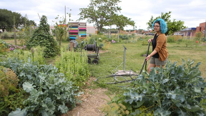 Cassidy Reynolds works in the Grow Local South Texas Learning Garden on Monday, May 15, 2017.