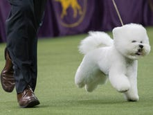 The 2018 Westminster Kennel Club Dog Show