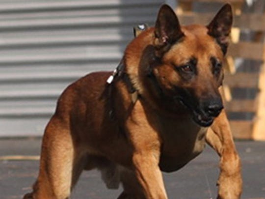 25 most heroic dogs in America