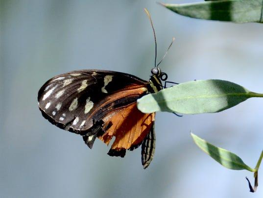 butterfly-wonderland1
