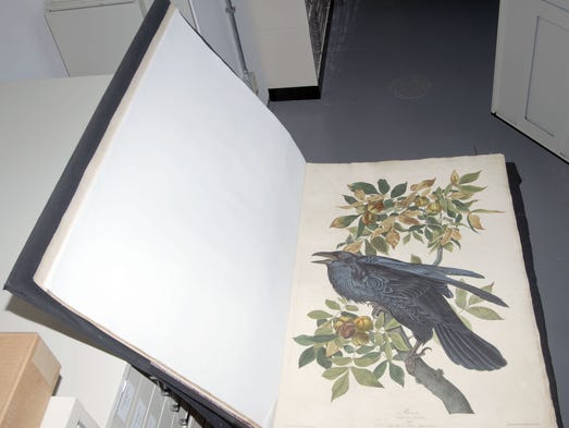 Indiana Historical Society has decided it will put its complete sets of John James Audubon's The Birds of America and Viviparous Quadrupeds of North America up for auction by Sotheby's in April 2014.