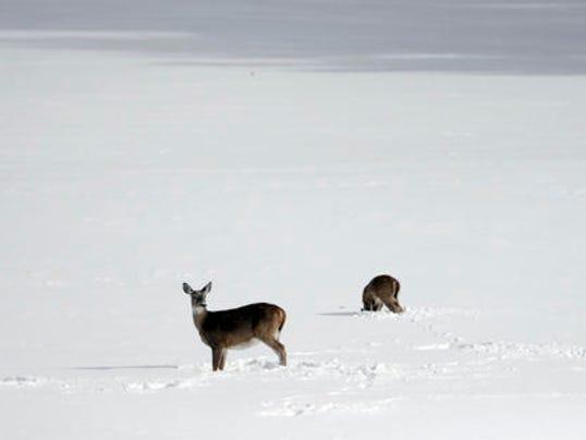 636174927655033902-Deer-snow-AP-2016.jpeg