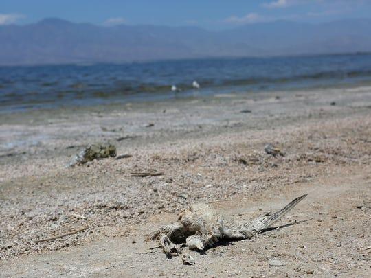 The body of a dead bird lies decomposing in the sun