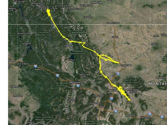 The path of a mountain lion that traveled from British Columbia to Montana.