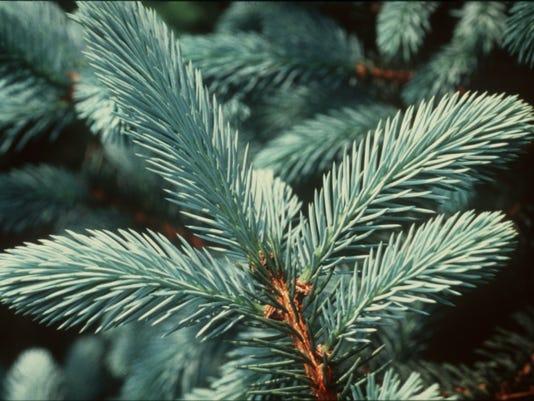 DFP 1130_dfp_travel_christmas_tree (2).JPG