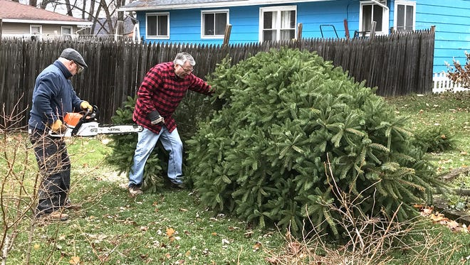 Arctic League board members Tom Bruner, left, and Tom Seem prepare to make a second cut Thursday on a white spruce selected as the Christmas tree for this Sunday's annual broadcast.