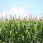 Ups and downs for October crop, livestock prices