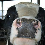 Holstein Convention hosts recall their history