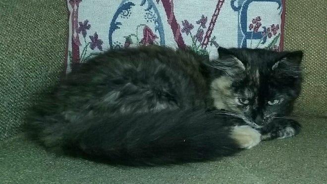 Mopsy is a lovely girl.