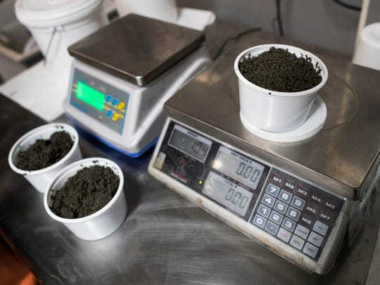 Caviar is weighed at the Lake City Fresh Fish Market in Grand Rivers, Kentucky.