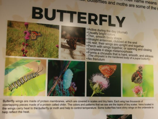 The new Priscilla Gaumer Butterfly and Pollinator Exhibit at the Annett Nature Center features information about the life stages of a butterfly.