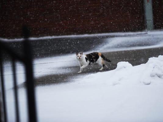 JD-Snow-4930.jpg