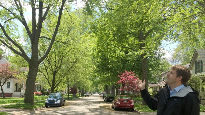 Brent Geurink, associate planner with the Macomb County Department of Planning & Economic Development, talks about the tree canopy on Lodewyck in Mt. Clemens on May 13, 2016.