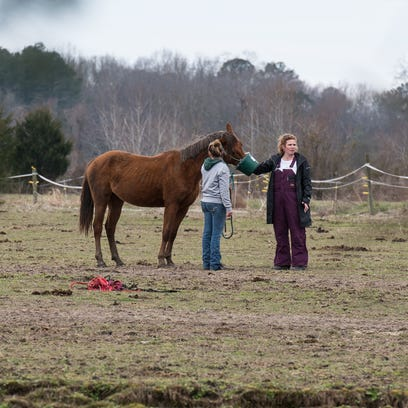 Two women feed a horse at a farm on Cherry Walk Road