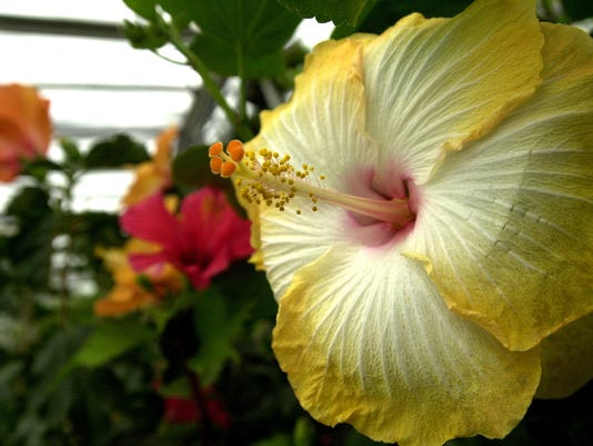 7-Hibiscus heaven