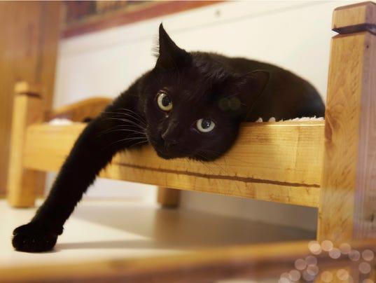 636221483279566768-Cats-Keep-Claws-TN101.jpg