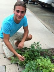 Budding gardener Matt Dionise found an odd growth that looks like cherry tomatoes on his potato plant. It's actually seeds of the potato plant.