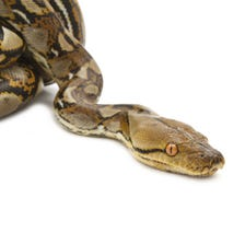 Parents say they're alarmed about snakes seen inside and outside a school south of Atlanta. A parent told WSB-TV that a snake crawled over another parent's foot during a PTA meeting and open house on Tuesday.