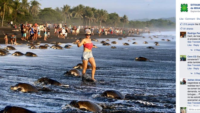 Tourists posed for pictures and stood in the way of sea turtles attempting to nest on a beach in Costa Rica.