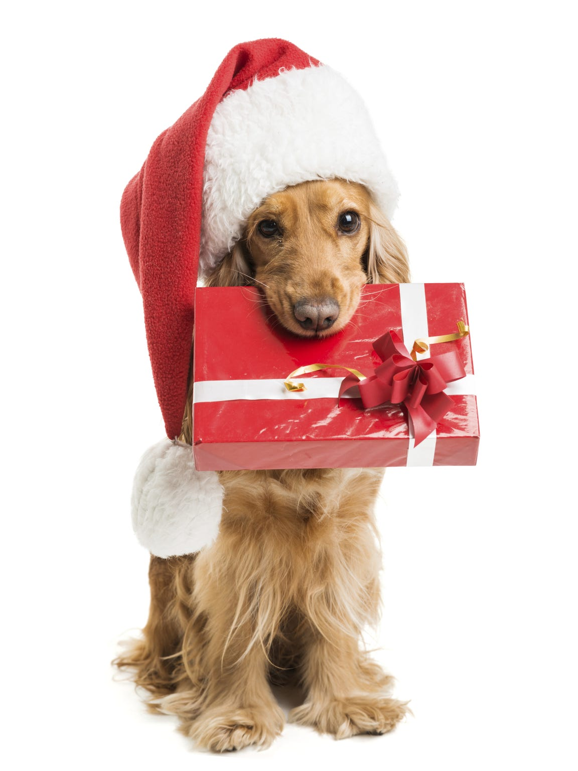 Get a photo of Santa with your dog or cat on Dec. 10 at the mall.