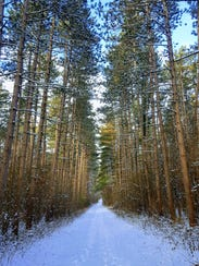The Scuppernong Trails pass through pine plantations