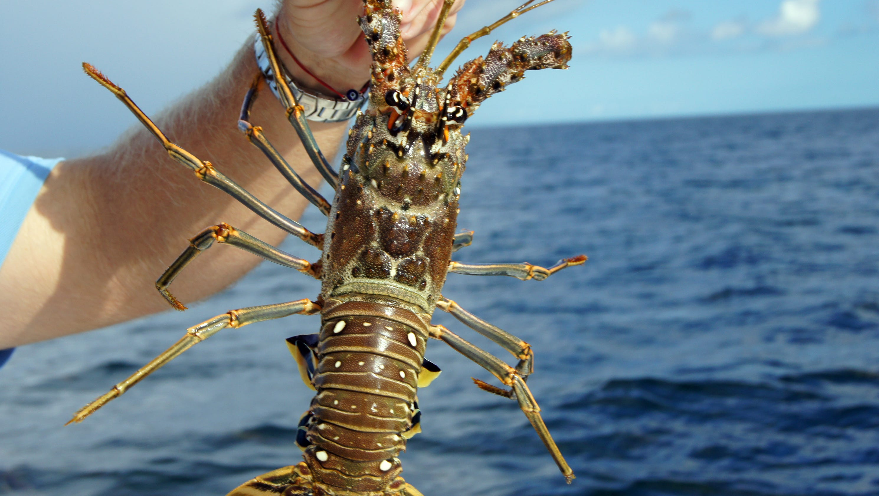Grilled Florida lobster with brandy sauce recipe