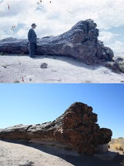 Petrified Forest National Park uses photographic mapping