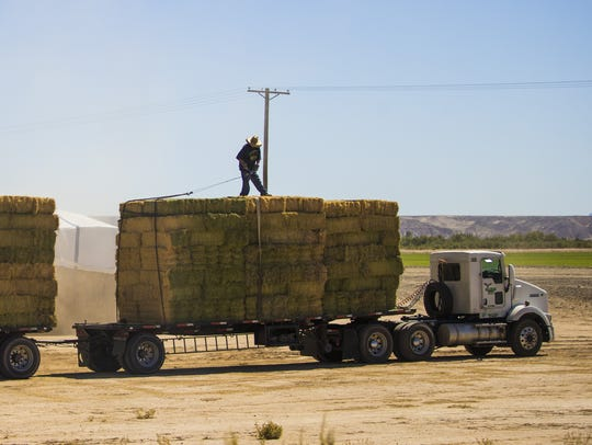 A worker straps down bales of alfalfa on the Colorado