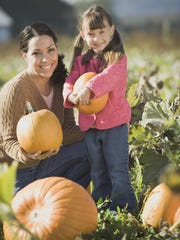 There will be plenty of options coming up in October to help you on your quest to find the perfect pumpkin to carve.