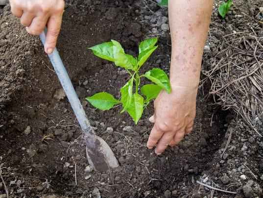 635959862599518573-Planting-Trees.jpg
