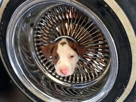 Stuck puppy