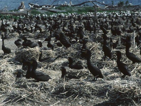 YoungIsland1999.jpg