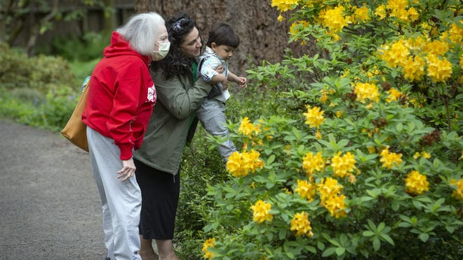 In this photo taken earlier this year, Alana Khastedai, left, looks at a rhododendron with her grandson, Viju Mareboni, and her daughter, Michele Mareboni, at Hendricks Park in Eugene Friday. Khastedi, 73, always wears a mask while Mareboni wears a mask when she goes to stores and other places where she feels it would not be possible to maintain social distancing. [Andy Nelson/The Register-Guard] - registerguard.com