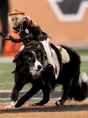 Team Ghost Riders provided the entertainment during Bengals-Texans halftime.