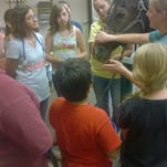 Members of a Southern Nevada 4-H club check out a horse at the Desert Pines Equine Medical and Surgical Center.