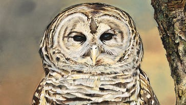 Art exhibit celebrates New Jersey's rare and resilient creatures
