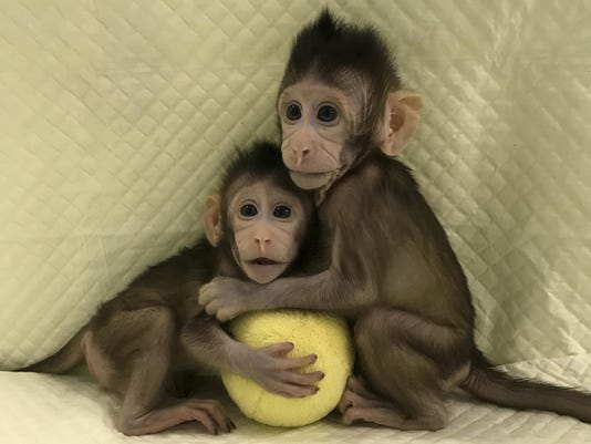 China Cloned Monkeys