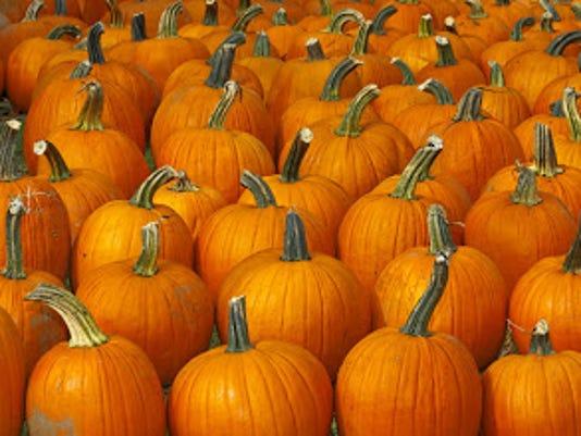 BHM pumpkin patch