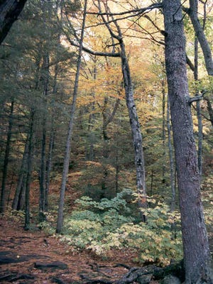 Tahquamenon Falls State Park hosts their fall harvest festival during peak color, the weekend of October 11th.