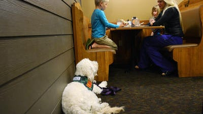 Clover the diabetes alert dog that takes care of River McKenzie appeared on The CW last week.