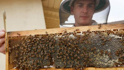 The Palm Desert City Council has approved an ordinance allowing backyard beekeeping in most of the city's residential areas.