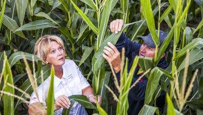DuPont Pioneer crop scientists.