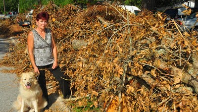 Judy Madl of Titusville found out on Oct. 1 that her home owner's insurance was cancelled. During Hurricane Matthew a large oak tree fell on the back of her home, seriously damaging her porch and family room. She found out later that the bank got her insured with another company and her damage was covered. The oak tree is now piled up on the curb.