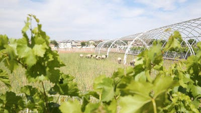 Agritopia in Gilbert is a blend of farm and suburban living.