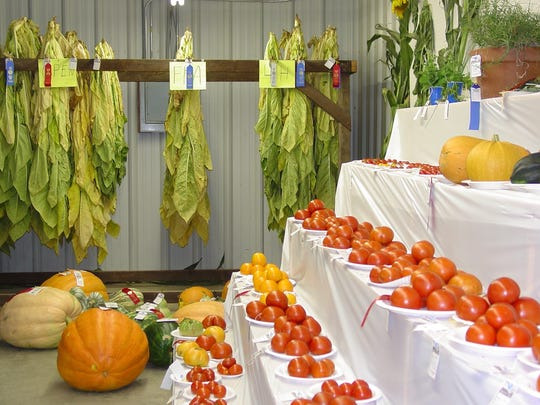 This shot from a previous Boone County Fair shows tobacco, pumpkins and tomatoes on display.